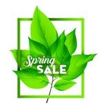 Venta de la primavera Fotografía de archivo libre de regalías