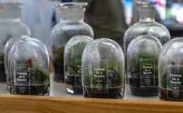 Venta de las peque?as plantas en las botellas de cristal imagen de archivo libre de regalías