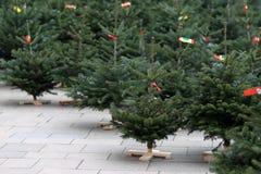 Venta de los árboles del Año Nuevo Fotos de archivo