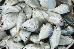 Venta de los pescados frescos Fotos de archivo