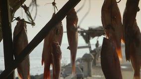 Venta de los pescados frescos del sábalo del bonga, Conakry almacen de video
