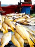 Venta de los pescados frescos en mercado Fotografía de archivo