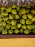 Venta del coco Imagen de archivo libre de regalías