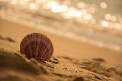 venta en la playa Fotos de archivo