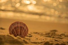 venta en la playa Foto de archivo libre de regalías