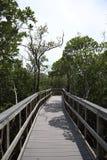 Ventaja del puente de madera a la selva Rastros de madera boardwalk Un muelle sobre el agua en las rocas indias vara la reserva n imagen de archivo libre de regalías