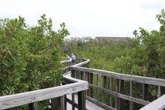 Ventaja del puente de madera a la selva Rastros de madera boardwalk Un muelle sobre el agua en las rocas indias vara la reserva n imágenes de archivo libres de regalías