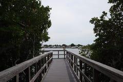 Ventaja del puente de madera a la selva Rastros de madera boardwalk Un muelle sobre el agua en las rocas indias vara la reserva n foto de archivo libre de regalías