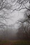 Ventajas de la trayectoria en bosque de niebla del otoño Foto de archivo libre de regalías