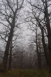 Ventajas de la trayectoria en bosque de niebla del otoño Fotografía de archivo