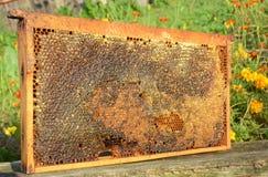 Ventajas y receta crudas del panal panal de la miel para la venta Fotos de archivo