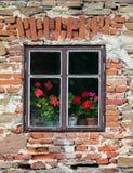 Ventana con las flores Fotografía de archivo libre de regalías