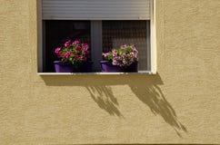 Ventana con las flores Imagenes de archivo