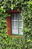 Ventana con las hojas verdes Fotos de archivo