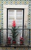 Ventana con las plantas florecientes en travesaño en Lisboa Fotos de archivo