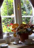 Ventana con los potes y la planta, detrás de la rejilla blanca fotografía de archivo