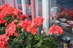 Ventana de la fachada enmarcada con las flores fotos de archivo libres de regalías