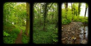 Ventana de la naturaleza Foto de archivo libre de regalías