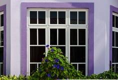 Ventana de madera blanca con el ajuste violeta y las flores rizadas Fotografía de archivo libre de regalías