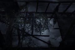 Ventana de madera del viejo daño con el pájaro, concepto misterioso Fotografía de archivo