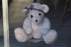Ventana de Teddy Bear Looking Looking Out foto de archivo libre de regalías