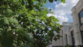 Ventana del boutique Marca de lujo ramas de árbol, hojas, boutique atractivo boutique atractivo Árbol en campo metrajes