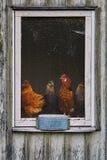 Ventana del gallinero Fotografía de archivo