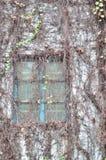 Ventana en la pared cubierta por el liana Fotos de archivo