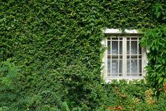 Ventana en las hojas Foto de archivo libre de regalías