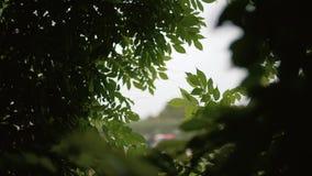 Ventana en las hojas en bosque almacen de metraje de vídeo