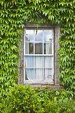 Ventana irlandesa vieja típica con la pared cubierta en la hiedra Irlanda Imagen de archivo