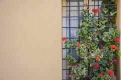 Ventana italiana con la rejilla del metal, adornada con las flores frescas Imagen de archivo