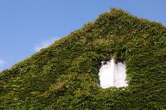 Ventana Overgrown Imagen de archivo