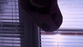 Ventana Persiana Un juguete Calcetín de la Navidad Mañana Resplandor en la ventana del agua metrajes