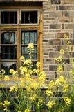 Ventana quebrada, flores frescas imágenes de archivo libres de regalías