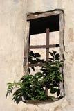 Ventana vieja con el cedazo de acero Fotos de archivo libres de regalías