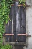 Ventana vieja con los obturadores y la vid verde de la hiedra en stu Imagenes de archivo