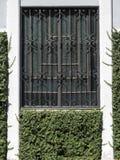Ventana vieja del metal de la American National Standard del vidrio con las enredaderas Imagen de archivo libre de regalías