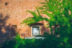 Ventana vieja rodeada por las plantas de la hiedra del arrastramiento Imágenes de archivo libres de regalías