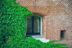 Ventana vieja rodeada por las plantas de la hiedra del arrastramiento Imagen de archivo