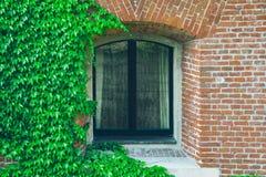 Ventana vieja rodeada por las plantas de la hiedra del arrastramiento Fotografía de archivo
