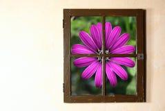 Ventana y flor Foto de archivo