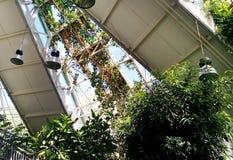 Ventanas de cristal de la torsión del viento de las plantas de jardín en un invernadero Edificio conservador del naranjal fotografía de archivo libre de regalías