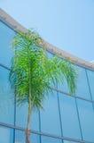 Ventanas de cristal unidireccionales en la fachada de una palmera Fotografía de archivo