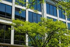 Ventanas teñidas y árboles verdes de la primavera Imágenes de archivo libres de regalías