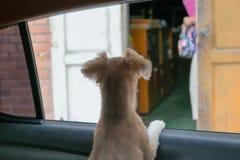 Ventanilla del coche del perro Fotos de archivo libres de regalías