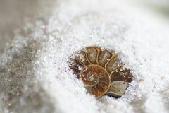 Vente aux enchères d'une ammonite plus que des millions Images stock