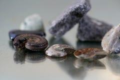 Vente aux enchères d'une ammonite plus que des millions Photo stock