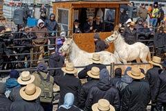 Vente aux enchères de cheval du comté de Lancaster Photographie stock
