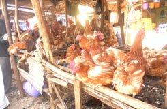 Vente de poulet d'air ouvert Images stock